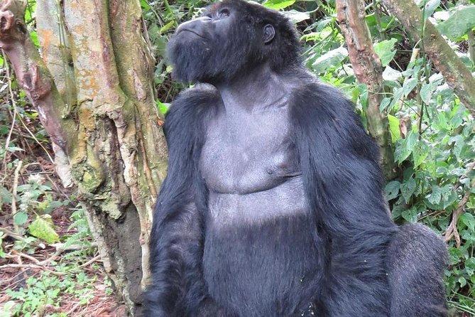 2 days Rwanda gorilla tracking tour