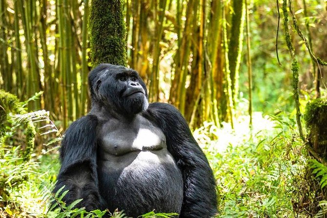 3 days Rwanda gorillas and golden monkeys tracking tour photo 1