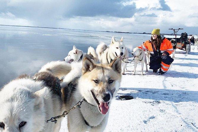 Husky Sledding Tour from Capital Region