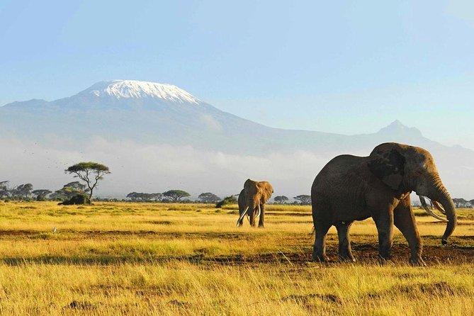 3 Days Tsavo National Park Safari Holiday