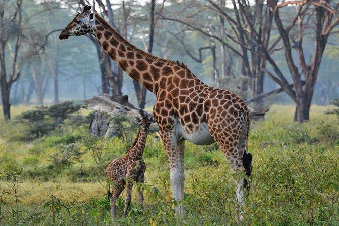 14 Days Best of Kenya Birding Safari Holiday