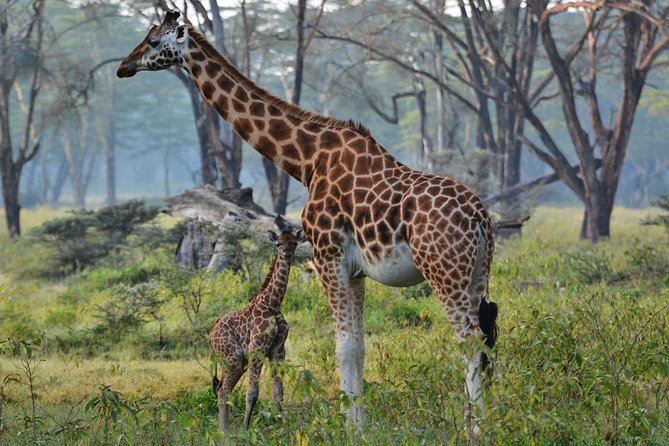 Kenya wildlife Photographic Safari - 11 Days