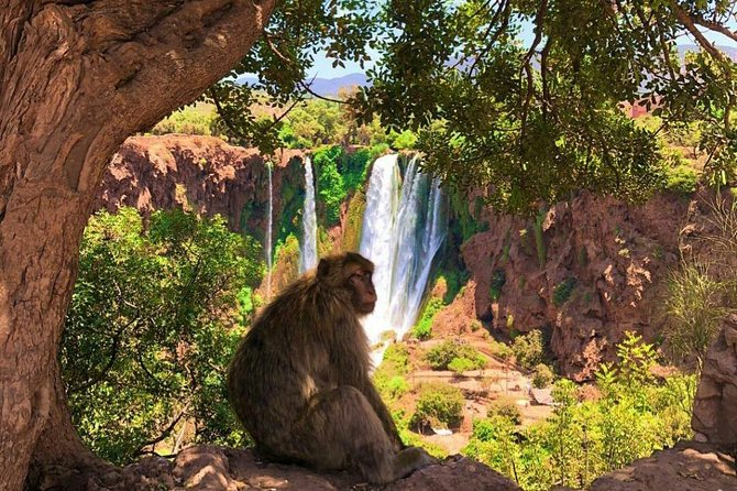 One Day Private Tour To Ouzoud Waterfalls from Marrakesh