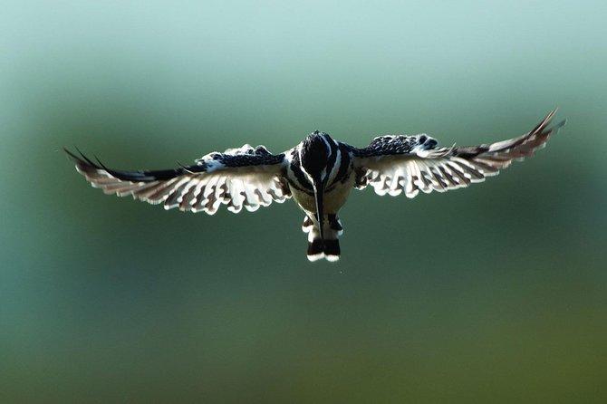 15 Days Kenya Birding Safari