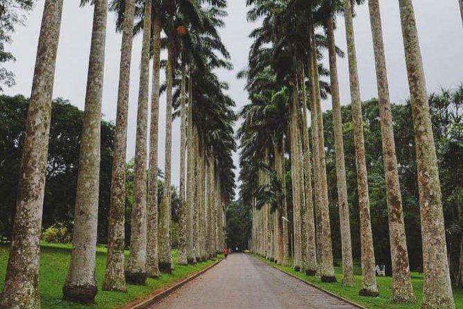 Aburi Botanical Gardens And Boti Falls Experience