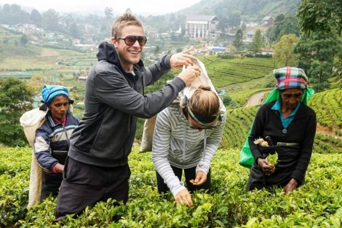 Tea Plucking And Tea Factory Tour - A Private Tour in a Car