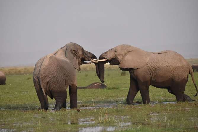 9 Days Aberdares, Samburu, Nakuru, Masai Mara & Amboseli