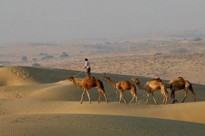 2 Days-1 Night Camel Tour