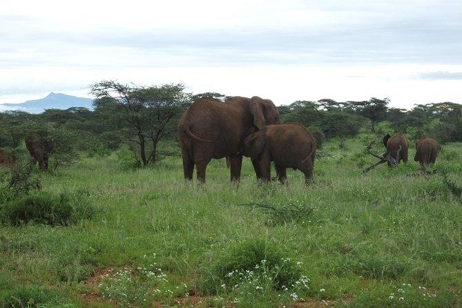 3 Days Samburu Safari