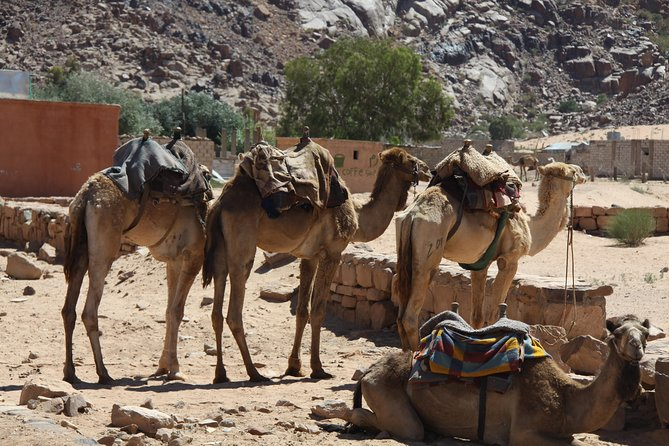 Private Day tour to Wadi Rum from Petra photo 3