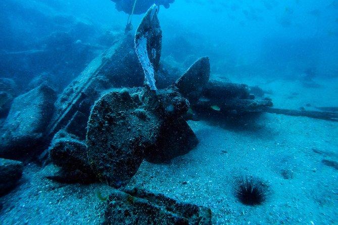 Short Fun Dive Trip - Fifi Wreck, Artificial Reef or Cut Wreck