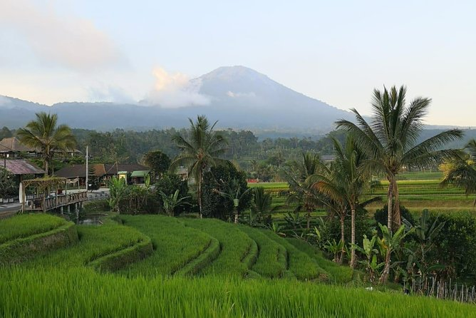 Best of North Bali Shared Tour: Jatiluwih Rice Terrace, Munduk waterfall