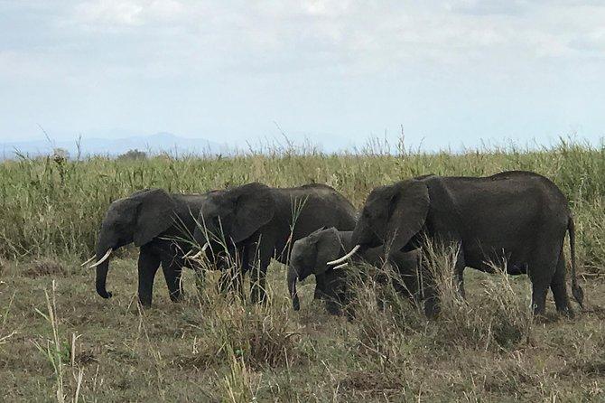 Safaris to Serengeti