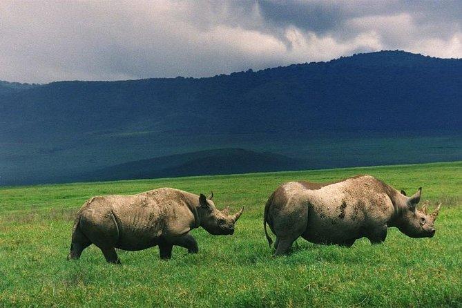 Tanzania Private Classic Safari - 7 Days