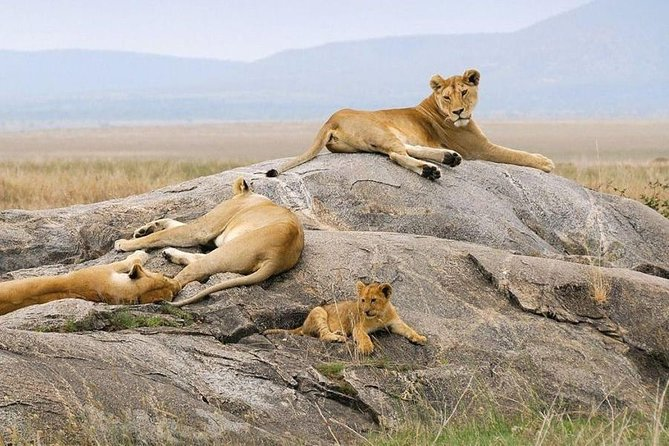 9 Days Kenya Family Safari Holiday Packages