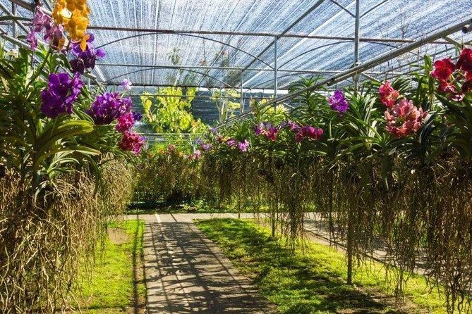 Private Sightseeing Tour (F - Orchid Farm) - experienced driver cum guide. photo 6