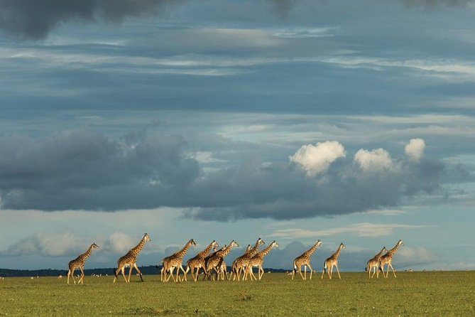 6 Days Kenya Lodge Safari Packages photo 1