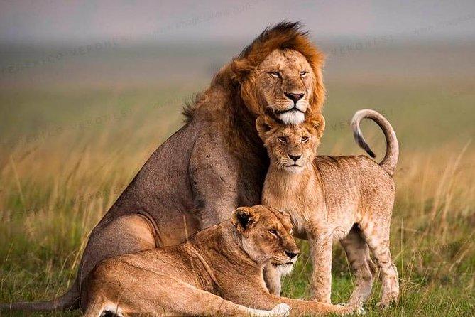 Tanzania Wildlife Encounters - 6 Days