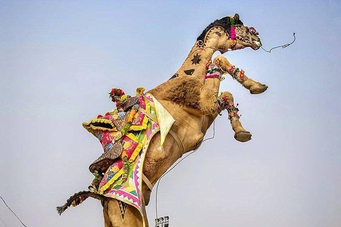 """Same Day Ajmer-Pushkar Tour Through AC Car"""