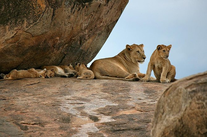 Tanzania Predator Safari - Luxury Camp - 4 Days