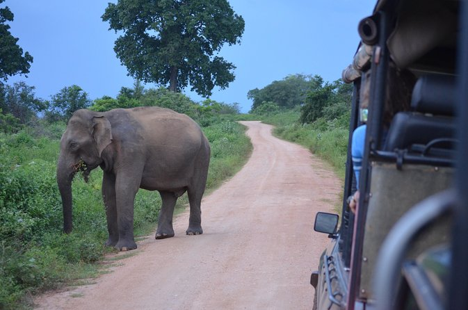 Majestic beast safari, Sri Lanka's oldest Elephant Park-Udawalawe National Park