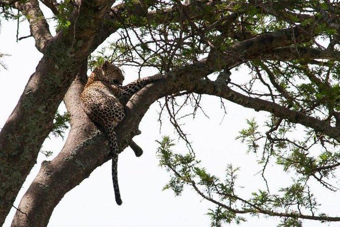 Tanzania Wildlife Safari - 3 Days