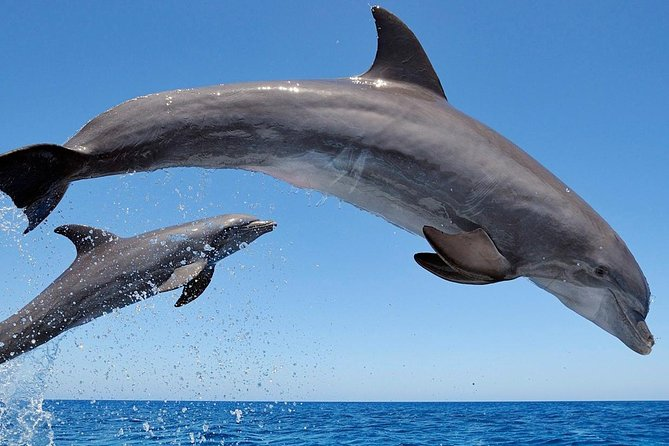 Setúbal Private Tour - Including Dolphin Watching