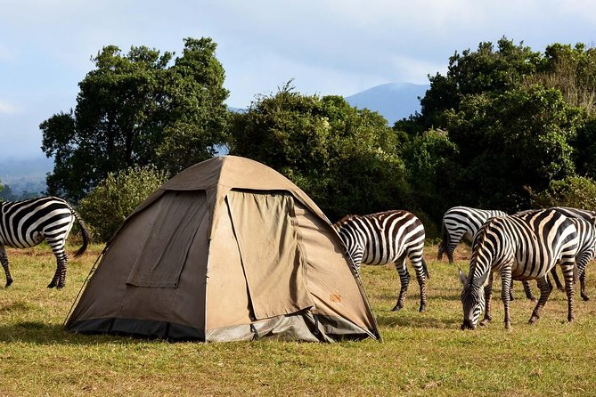 PRIVATE Day trip to Lake Manyara national park