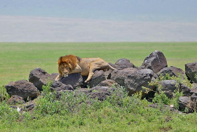 4 Days Private Camping In Serengeti Ngorongoro And Manyara photo 8