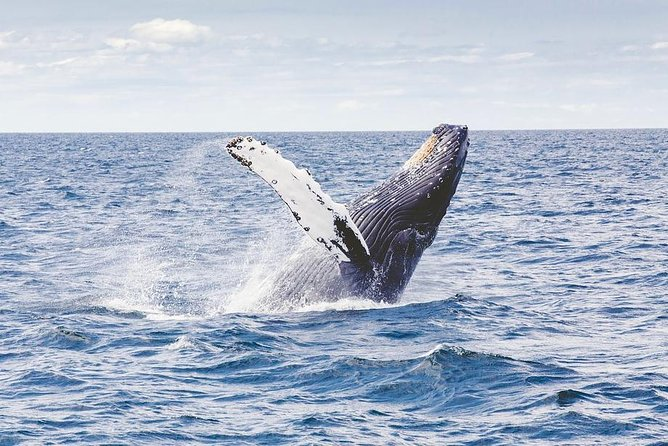Icy Strait Shore Excursion: Whale Watching Adventure Tour