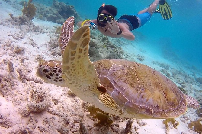 SoloBon's weekly Sail - Snorkel & Sunset Safari