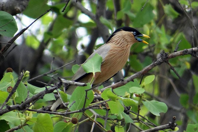 Bharatpur Birding tour from Agra