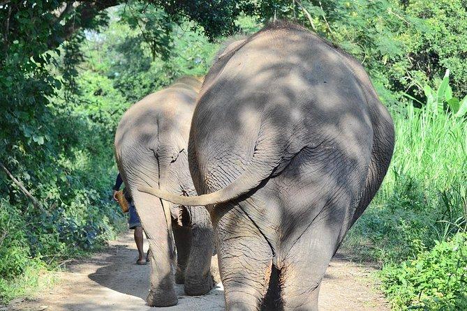Experience Elephant Sanctuary + Sticky Waterfall