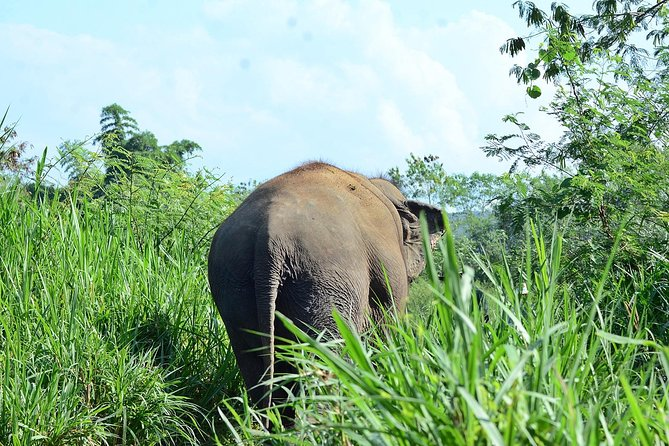 Elephant Sanctuary+Bamboo Rafting+Long Neck Village