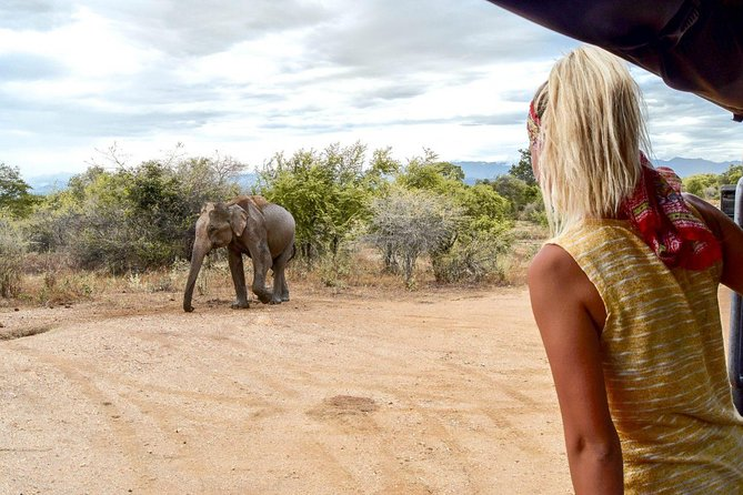 Udawalawe Safari & Elephant Transit Home Visit with Lunch from Hambantota Harbor