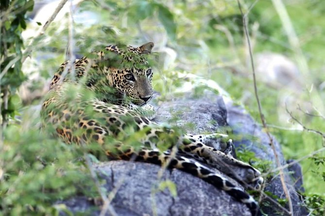 Full Day Leopard Safari at Yala With Picnic Lunch from Hambantota harbor
