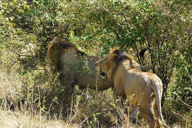 2 days masai mara trip