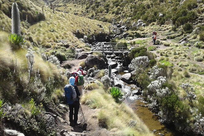 4 Days Mount Kenya Climbing- Naro Moru Route photo 11
