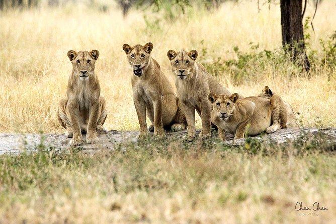 4 Days Joining group budget camp Safari in Serengeti , Ngorongoro and Tarangire