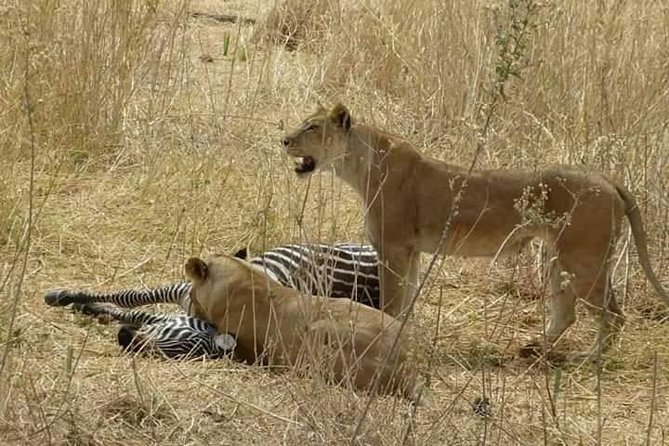4days 3nights Safari To Mikumi, Ruaha National park And Maasai Village photo 1