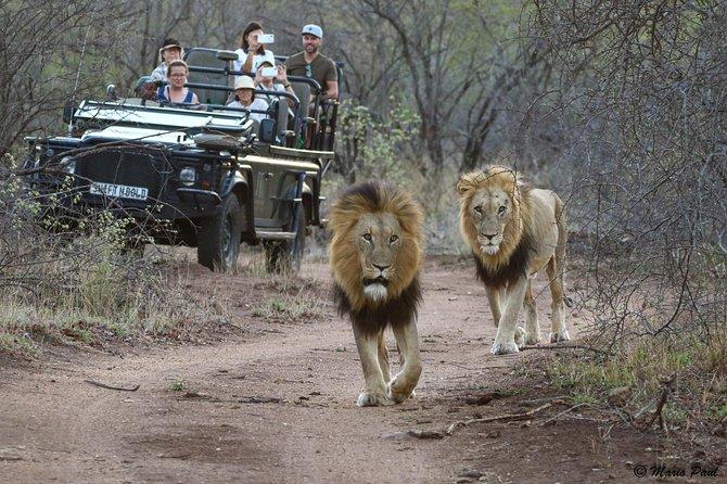 Kruger Park Day Safari