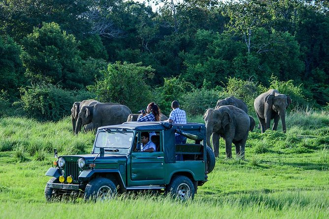 Udawalawe Safari Day Trip from Ahungalla & Kosgoda- All Inclusive