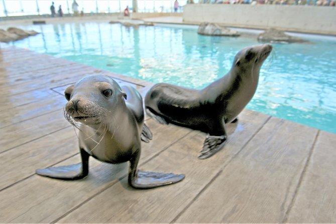 New England Aquarium Admission in Boston