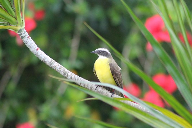 Bird-Watching and Wildlife Tour