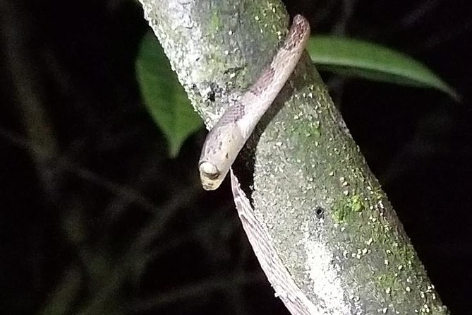 Night Tour in Guanacaste Province