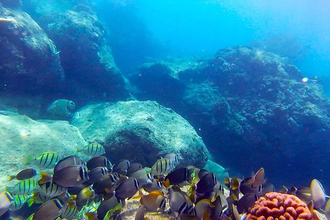 No Certification Required Guided Scuba Diving Tour photo 3