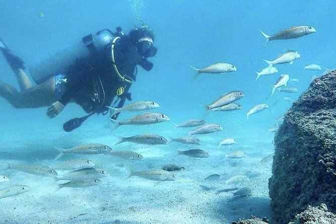 No Certification Required Guided Scuba Diving Tour photo 7