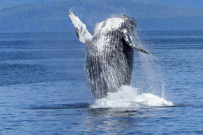 Humpback Whale Watch Kona