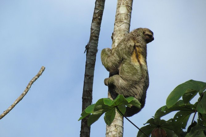 SLOTH PARK ADVENTURE from La Fortuna