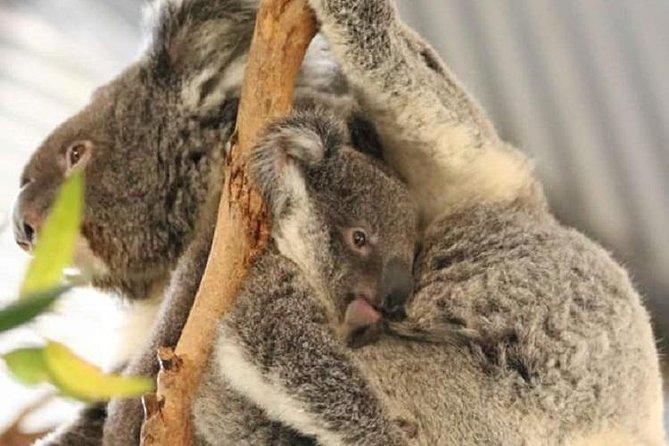 Skip the Line: Port Macquarie Billabong Zoo Koala and Wildlife Park Ticket